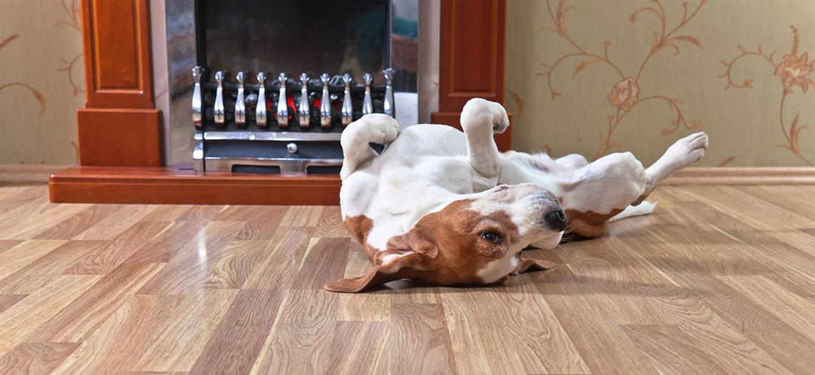 Houten vloeren en huisdieren